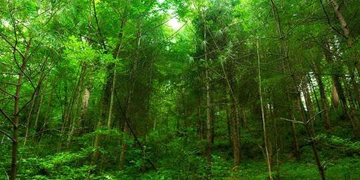 """Өнөөдөр олон улсын ой модоо хамгаалах """"Ойн өдөр"""" тохиож байна"""