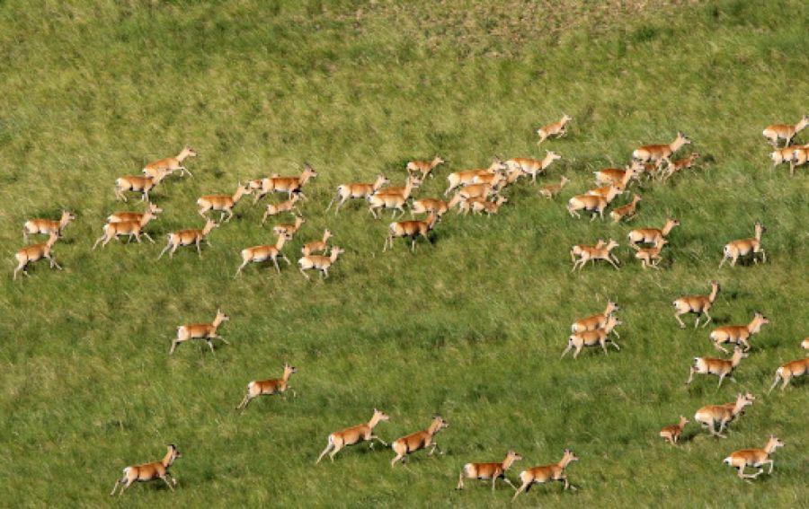 Тосон Хулстайн байгалийн нөөц газрыг ЮНЕСКО-д бүртгэв